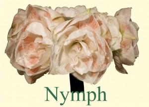 Rieger-Botanik_Amaryllis-Nymph