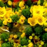 Ornithogalum-dubium-gelb