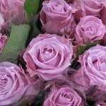 Rose_Ocean