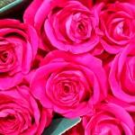 Rose-Pink-Floyd
