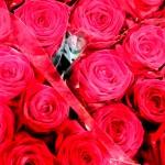 Rose-Red-Naomi