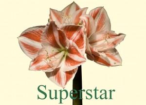 Rieger-Botanik_Superstar