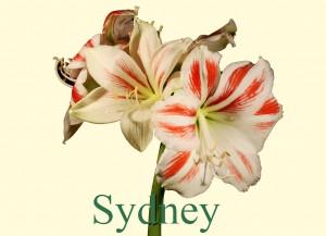 Rieger-Botanik_Sydney