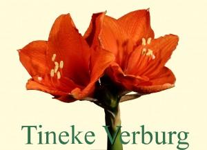 Rieger-Botanik_Tineke-Verburg