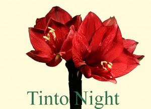 Rieger-Botanik_Tinto-Night